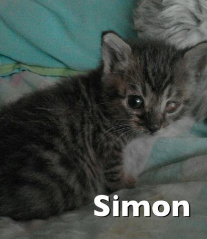 18-03-26 Simon